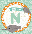ABC animals N is narwhal Childrens english vector image vector image