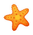starfish sea star and shell colorful cartoon vector image