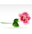 Pink rose Floral Design Element vector image