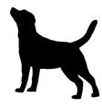 dog labrador retriever breed silhouette vector image vector image