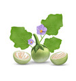 eggplant leave and purple flower vector image vector image