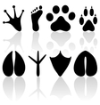 footprint collection vector image vector image