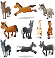 Horses and donkeys in different poses vector image