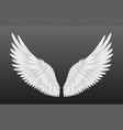 pair beautiful white angel wings isolated on vector image vector image