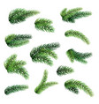set of fir branches isolated on white background vector image