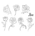 a set of sketches of roses variety of flowers vector image