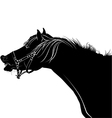 laughing horse vector image
