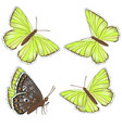 set yellow butterflies lycaenidae isolated on vector image vector image