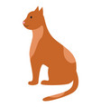 cat sit calmly and wait spotted ruddy pet posing vector image vector image