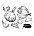 garlic hand drawn set vector image vector image