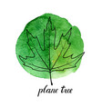 leaf of plane tree vector image vector image