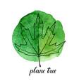 leaf plane tree vector image vector image