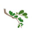 Oak-branch vector image