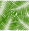 Palm Leaf Background vector image
