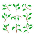 set spring branches with leaves vector image vector image