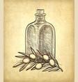 bottle olive oil and olive branch vector image vector image