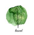 leaf laurel tree vector image vector image