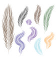 set of feathers for the object brush vector image