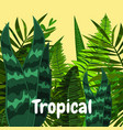 summer tropical jungle card with leaves cartoon vector image