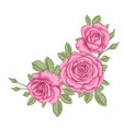 beautiful bouquet with three pink roses and vector image vector image