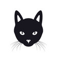 black cat face isolated vector image