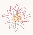 edelweiss flower symbol alpinism alps germany logo vector image vector image