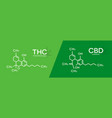 thc and cbd formula tetrahydrocannabinol and vector image
