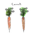 watercolour orange carrots wuth tops realistic vector image
