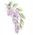 wisteria vector image vector image
