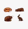 forest animals bear grizzly and red fox hare and vector image vector image