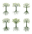 green spring trees with leaves vector image vector image