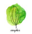 leaf camphor tree vector image vector image