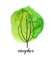 leaf of camphor tree vector image vector image