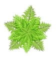 Plant of fern family on white background vector image vector image