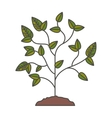 Plant with leaves design vector image vector image
