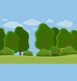 summer forest big trees with foliage round shape vector image vector image