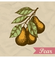 Pear branch Hand drawn engraved sketch vector image
