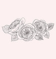 blooming flower hand drawn botanical blossom vector image vector image