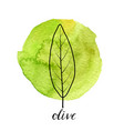 leaf of olive tree vector image vector image