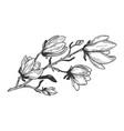 magnolia branch engraving vector image vector image