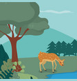 puppy deer in the forest vector image