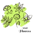 Set Magic Flowers vector image