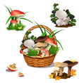 basket with mushrooms isolated on white background vector image