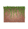 Brick wall and ivy vector image vector image