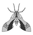 bug hand drawn insects vector image vector image