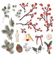hand drawn herbal set with pine branches vector image vector image