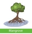 Mangrove cartoon tree vector image vector image