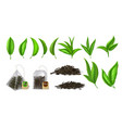 tea leaves realistic green and dried tea leaves vector image