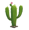 Classic green cactus closeup in cartoon style vector image vector image