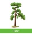Pine cartoon tree vector image vector image
